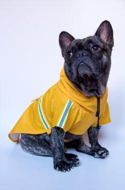 Bunda-do-dažďa-pre-psa