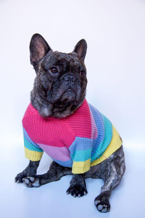 Dúhový-sveter-pre-psa