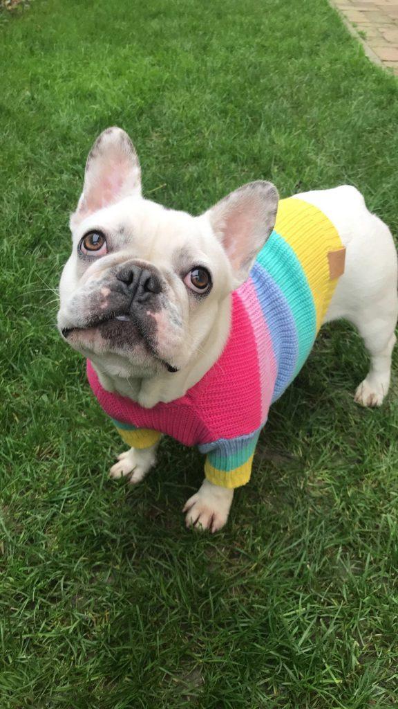 Oblečenie-pre-psov-DoggiesDream